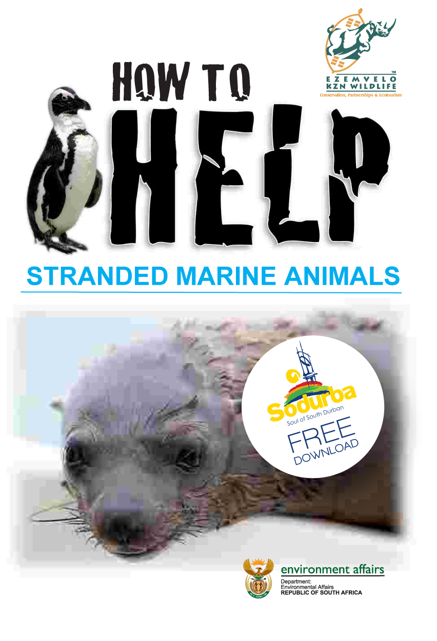 How to help a stranded animal